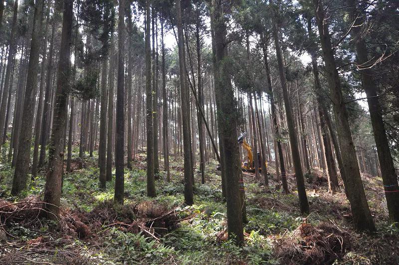 林業から建築へ