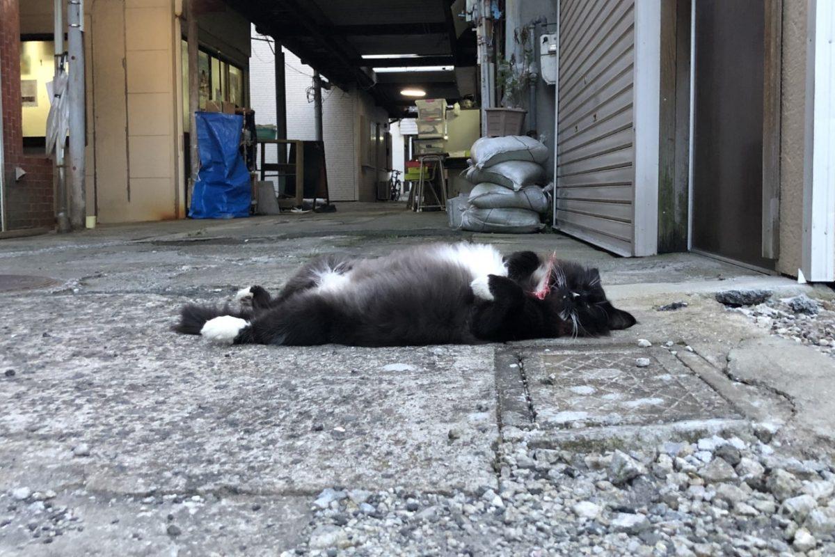 猫と地域活動